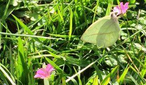 mariposa-feliz